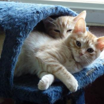 Pension pour chat dernière minute La Boisse