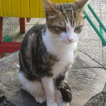 Pension pour chat avec terrain La Boisse