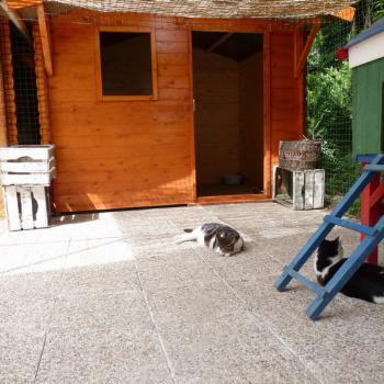 Garde de chat pas cher La Boisse