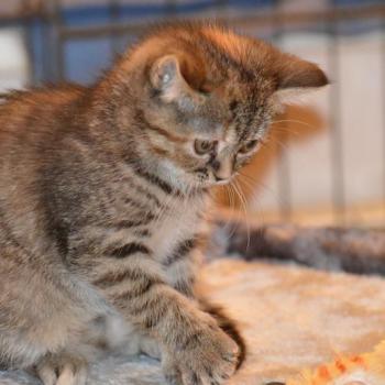 Pension pour chat pas cher La Boisse