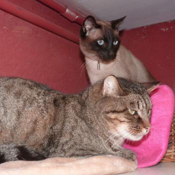 Garde de chat longue durée La Boisse
