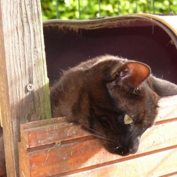 Bonne pension pour chat La Boisse