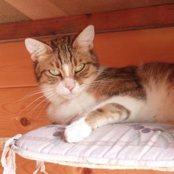 Pension pour chat avec extérieur La Boisse