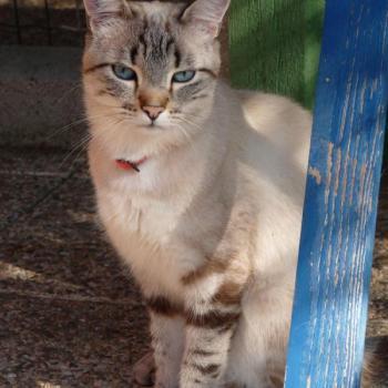 Garde de chat dernière minute La Boisse