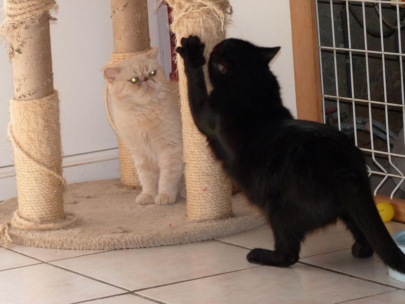 pension pour chat la boisse pension f line la boisse tarif de pension pour chat la boisse au. Black Bedroom Furniture Sets. Home Design Ideas
